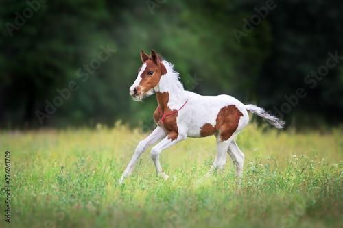 Foto Beautiful foal run
