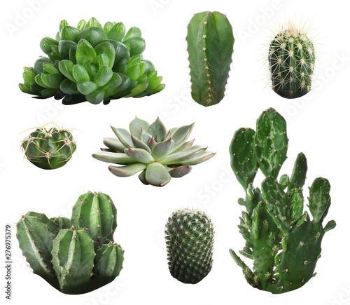 Fotografie, Obraz Beautiful cactus on white background