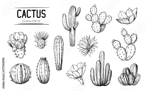 Obraz na plátně Set of cacti with flowers
