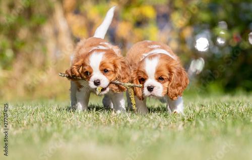 Valokuvatapetti Beautiful happy dog breeds