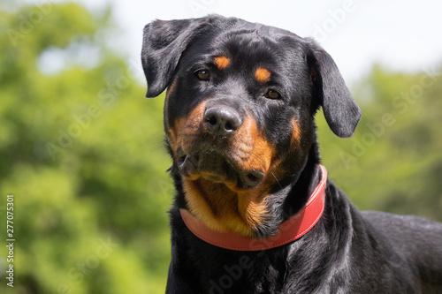 Obraz na plátně Portrait of a beautiful dog