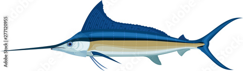 Photo vector swordfish Atlantic blue marlin