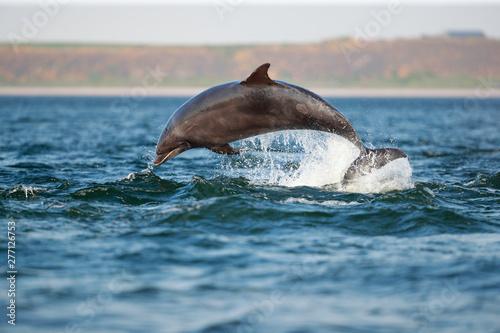 Wallpaper Mural leaping bottlenose dolphin