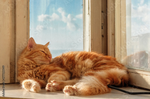 Canvastavla A ginger cat