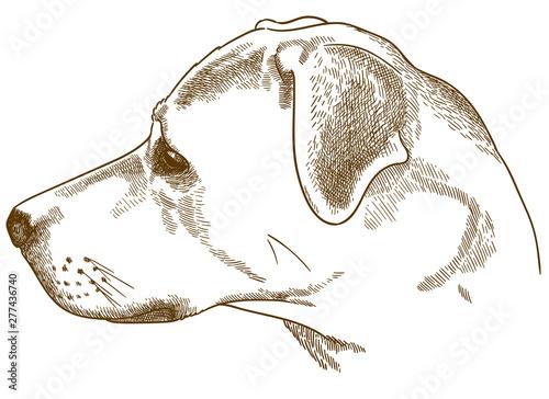 Stampa su Tela engraving illustration of labrador retriever cur head