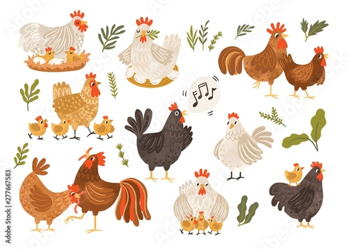 Collection of rooster, hen and chicks isolated on white background Fototapet