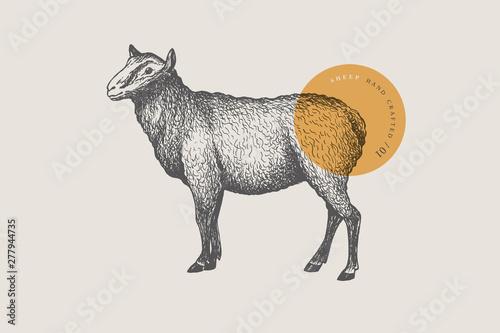 Stampa su Tela Graphic hand-drawn sheep on a light background