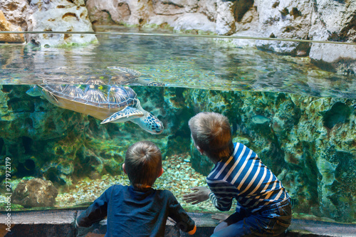 Canvas-taulu children watch the sea turtle in the aquarium