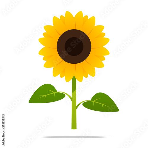 Cartoon sunflower vector isolated illustration Fototapeta