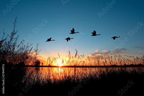 Canvas-taulu Geese flying over a beautiful sunset.
