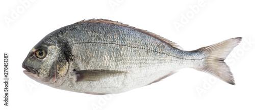 Photo dorado fish isolated without shadow
