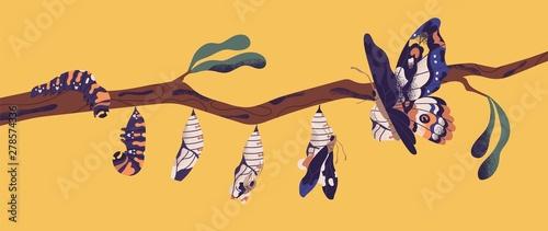 Fényképezés Butterfly development stages - caterpillar larva, pupa, imago
