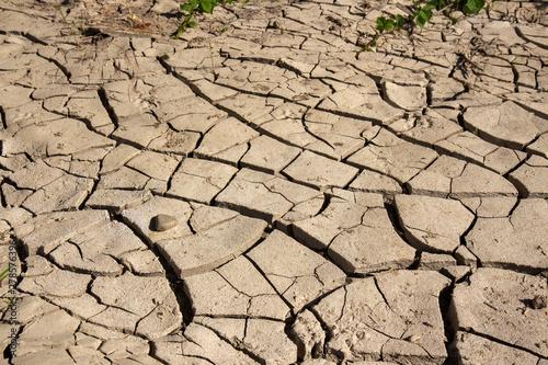 Slika na platnu drought desertification of agricultural land