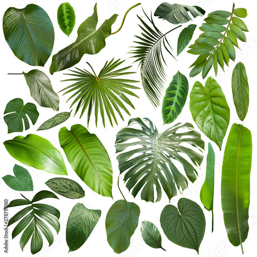 More beautiful exotic tropical leaves, isolated leaf background