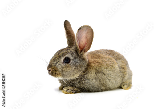 rabbit on a white background Fototapeta