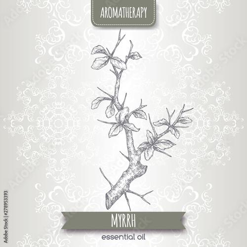 Photo Commiphora myrrha aka common myrrh sketch on elegant lace background