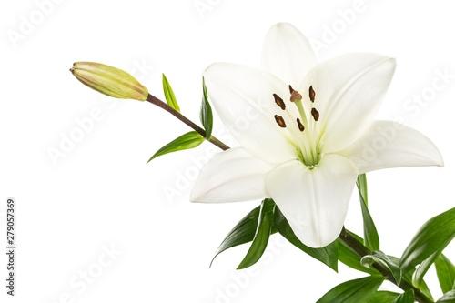Stampa su Tela white lily flower