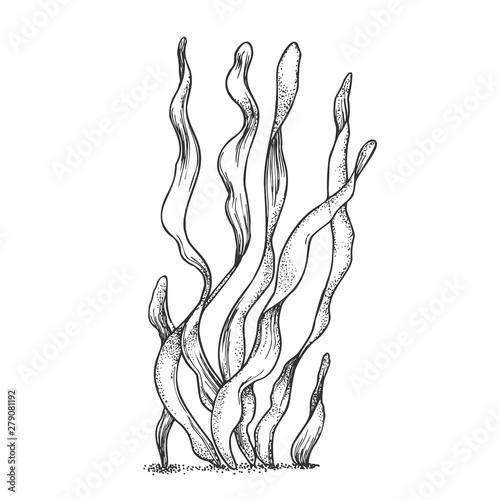 Wallpaper Mural Underwater Organism Algae Seaweed Doodle Vector