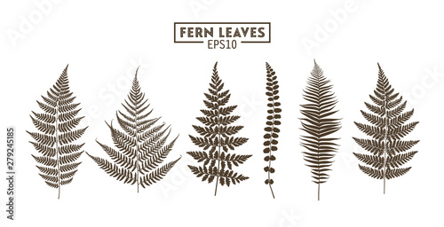 Obraz na plátně Set of fern leaves isolated on white background.