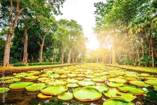 Canvas Print Botanical garden on Mauritius island