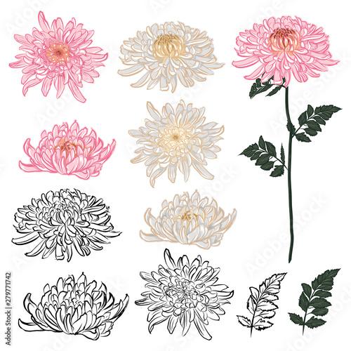 Fotografering Dark Summer night of chrysanthemum oriental blooming flowers with hand drawn bru