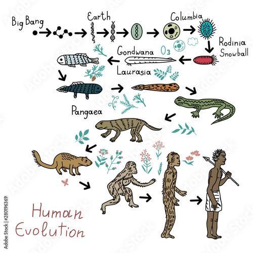 Fototapeta Human evolution illustration