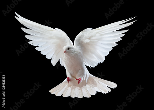 Billede på lærred Flying white doves on a black background
