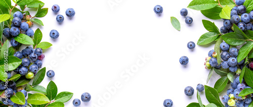 Fotografia, Obraz Blueberries and leaves