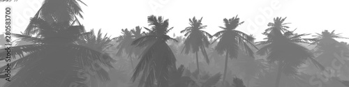 Silhouettes of palm trees on a white background, panorama of palm trees, 3d rendering