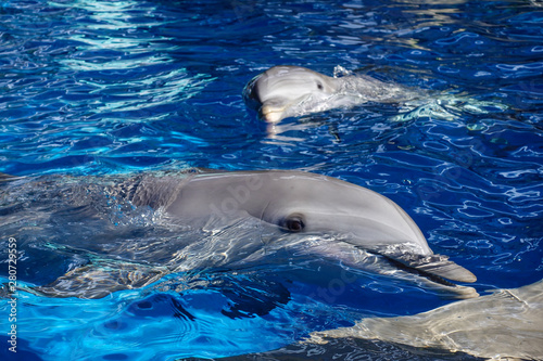 Dolphins playing in water