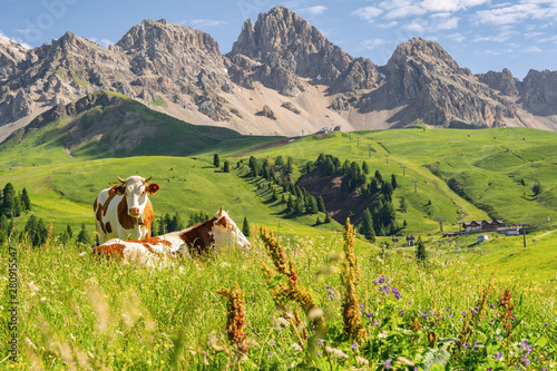 Stampa su Tela Scenic Alps with cow on green field