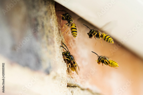 Wasps Causing Problem By Building Nest Under Roof Of House Tapéta, Fotótapéta