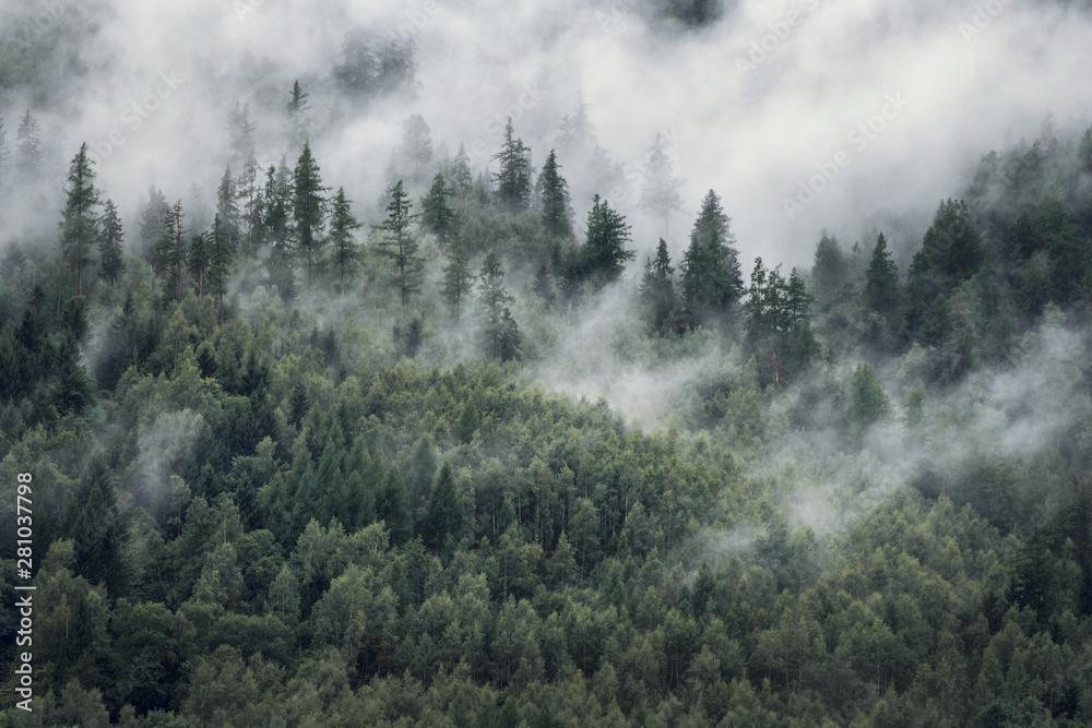 Fototapeta Drzewa w porannej mgle Widok na mglisty las
