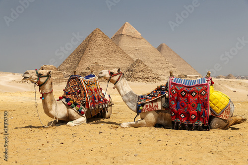 Photo Camels in Giza Pyramid Complex, Cairo, Egypt