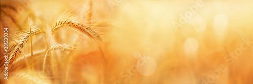 Golden wheat field in late summer Fototapeta