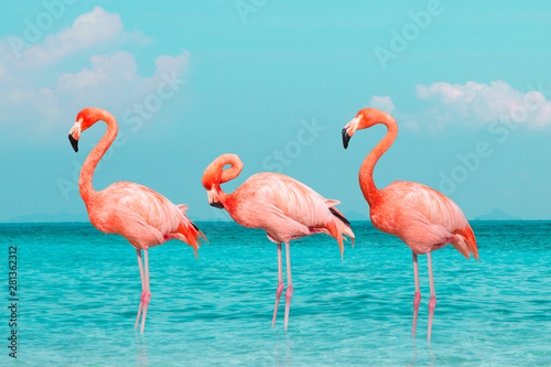 Obraz na plátne Vintage and retro collage photo of  flamingos standing in clear blue sea with sunny sky summer season with cloud