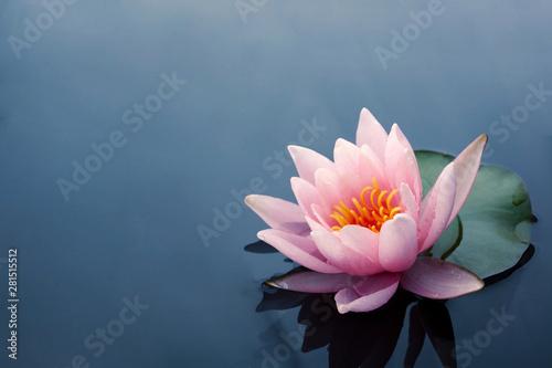 Stampa su Tela Beautiful pink lotus or water lily flowers blooming on pond
