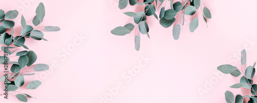 Eucalyptus leaves and branches on pastel pink background. Eucalyptus branches...