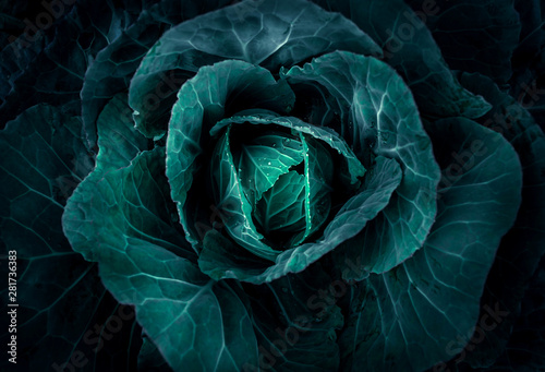 Carta da parati Soft focus of Big cabbage in the garden