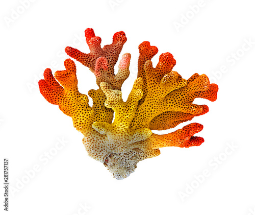 Fotografía coral isolated on white background