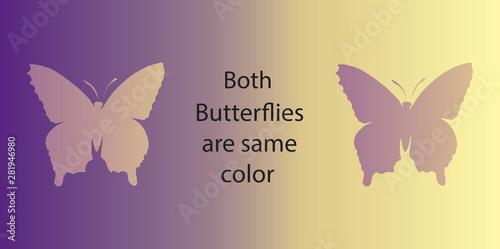 Billede på lærred Optical illusion. Both butterflies are the same color