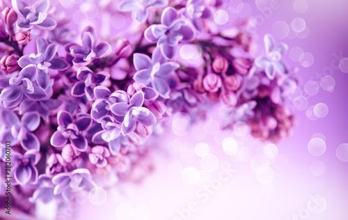 Lilac flowers bunch violet art design background. Beautiful violet Lilac flowers closeup. Watercolor nature floral backdrop
