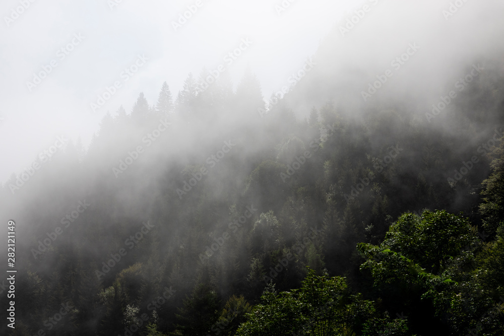 Foggy mysterious forest growing on hills
