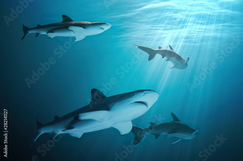 Canvas Print Many sharks are swimming underwater in ocean.