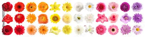 Set różni piękni kwiaty na białym tle. Projekt banera
