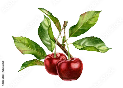 Leinwand Poster cherry fruits branch with leaves composition realistic botanical watercolor illu