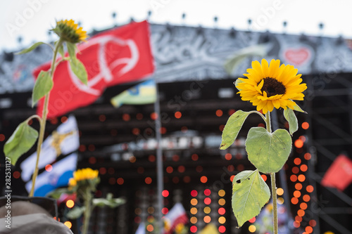 Fotografie, Obraz Sunflowers with the music stage in the background