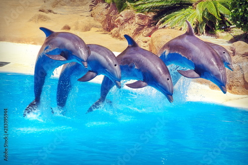 Photographie dolphin in the water