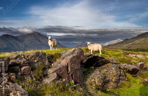 Obraz na płótnie Sheep On Top Of Rocky Hill In Scenic Rural Landscape In Scotland