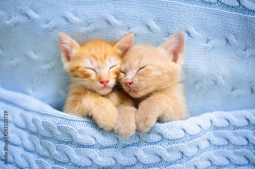 Fototapeta Baby cat. Ginger kitten sleeping under blanket